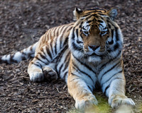 Colchester Zoo©Richard Brooks Photography20170218149