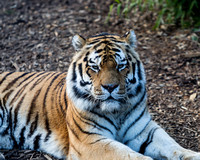 Colchester Zoo©Richard Brooks Photography20170218180