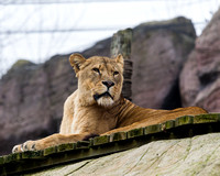 Colchester Zoo©Richard Brooks Photography2017021859