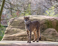 Colchester Zoo©Richard Brooks Photography20170218104